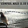 PIGEONS  06 10 12