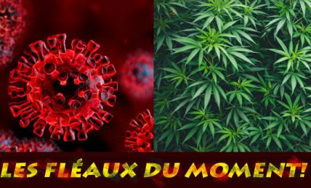 LES FLEAUX 07 05 21