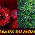 10 LES FLEAUX 07 05 21
